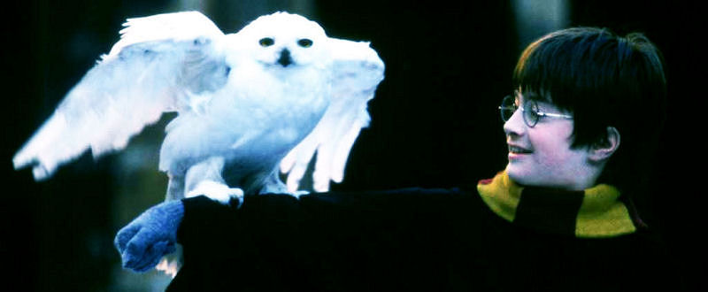 Hedwig et Harry, le début d'une longue amitié