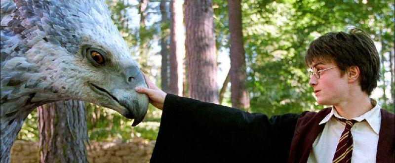 Buckbeak l'hippogriffe face à Harry Potter
