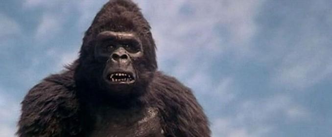 Kong lui-même se demande s'il n'aurait pas mieux valu trépasser plutôt que de subir ce terrible nanar...
