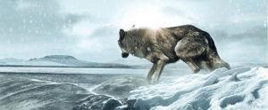 Wolf Totem (James Horner) Horner danse avec le Dernier Loup