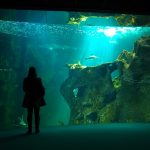 L'Aquarium da La Rochelle