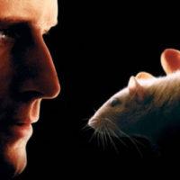 Willard (Shirley Walker) Des Rats et des Hommes