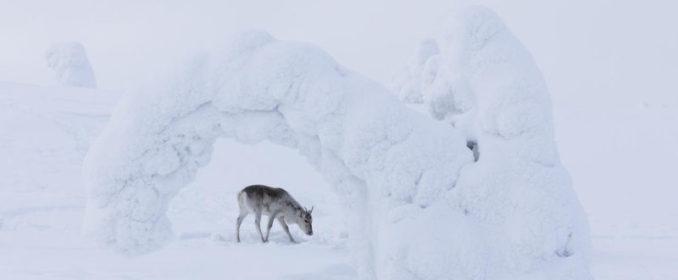 Aïlo, une Odyssée en Laponie (Guillaume Maidatchevsky - 2019)