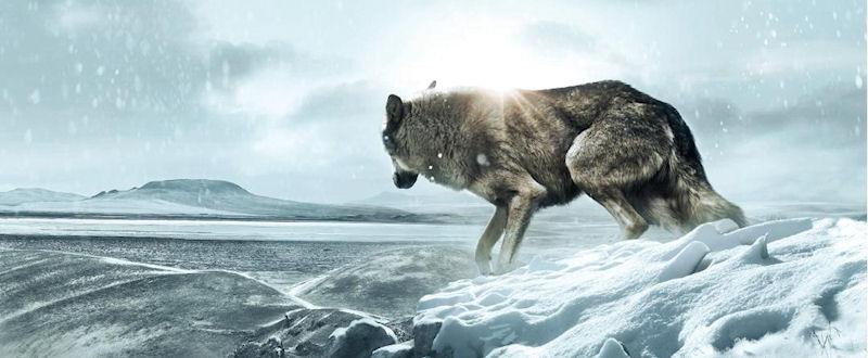 Wolf Totem (James Horner)
